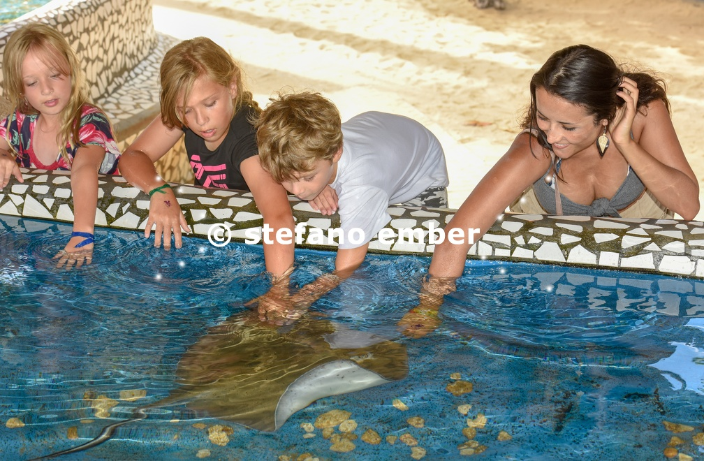 Woman and children caressing breed fish on Project Tamar tank at Praia do Forte