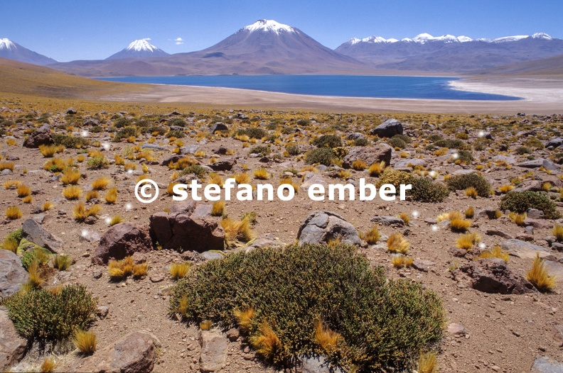 Lake_Miscanti_on_Atacama_desert.jpg