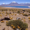 Lake Miscanti on Atacama desert