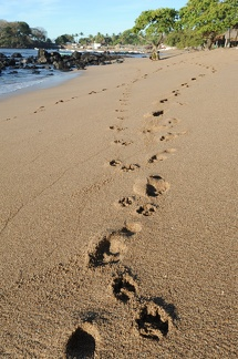Footprint on the beach of Los Cobanos