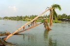 Children diving into the water from a palm tree on river Mekong at Don Det island