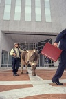 Proud farmer with his cow in front of a bank and businessman holding briefcase